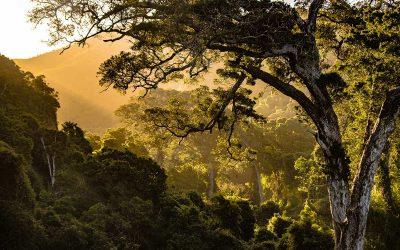 Grüne Bestattung: Bist du der Typ für umweltfreundliche Bestattungen?